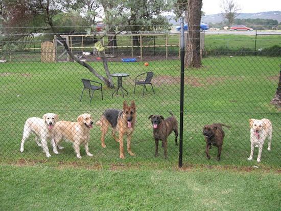 Dog Training Professionals in Perth