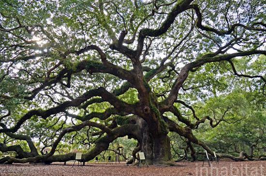 Cost Effective Tree Survey | Arboriculture | Landvision