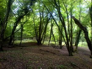 Tree care, Tree Surveys, and Arboriculture | Landvision