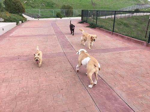 Find the bestdogwalkers in San Jose