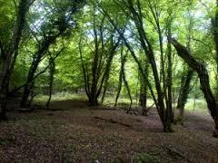 Tree Surveys and Arboriculture - Landvision