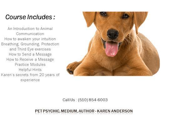 Pet Psychic & Deceased Pets, Author - Karen Anderson