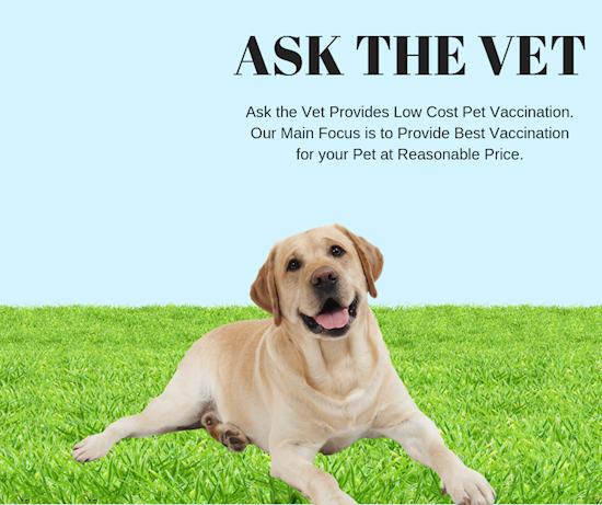 Get Euthanasia for your pet Through Veterinarian Kennesaw GA