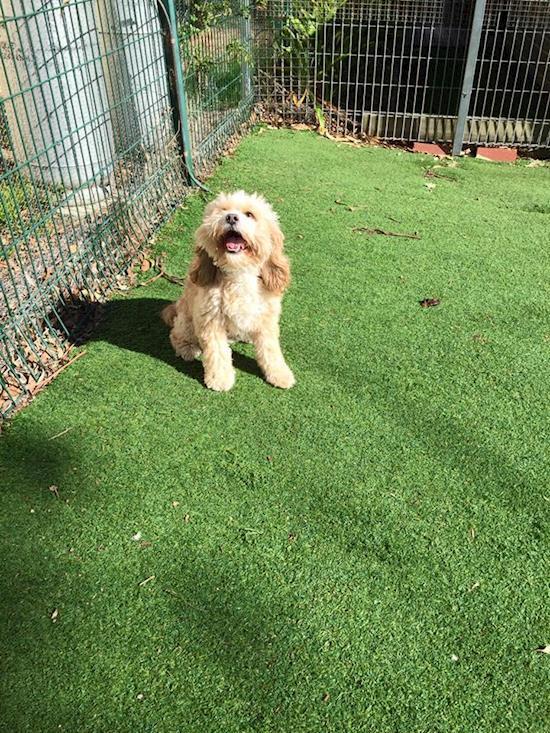 Pet Boarding in Epping  | Rilten Kennels