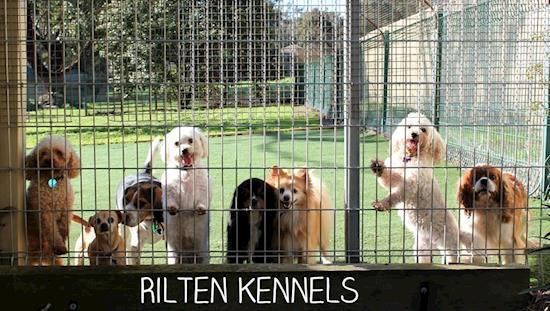 Pet Boarding Kennels & Cattery Melbourne | Rilten Kennels
