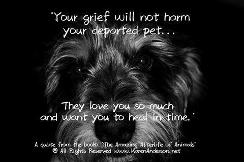 Animal Communication Tips & Pet Loss