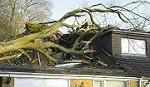 True Mans Tree Stanwood - Mount Pleasant Icon