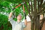 Steve Jones Tree Service Icon