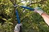 Anaheim Tree Care – Professional preventative tree maintenance
