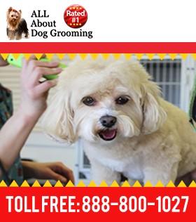 Online Dog Grooming Course Certification Program
