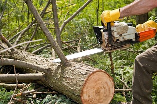Melgar's Complete Tree Service & Landscaping North Carolina