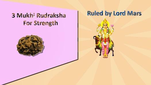 Miraculous Benefits of Natural 3 Mukhi Rudraksha