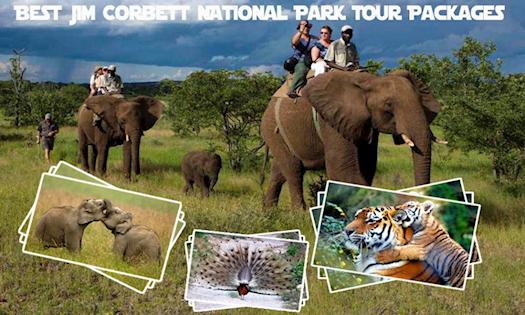 Best Jim Corbett National Park Tour Packages from Delhi for Wildlife Lovers