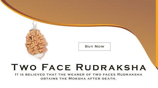 Natural 2 Mukhi Rudraksha