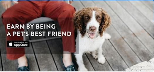 Holistic Healing with Veterinary Services Dubai