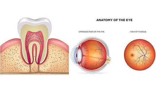 Medical illustrations services