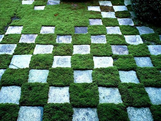 Chess-Styled Green Backyard