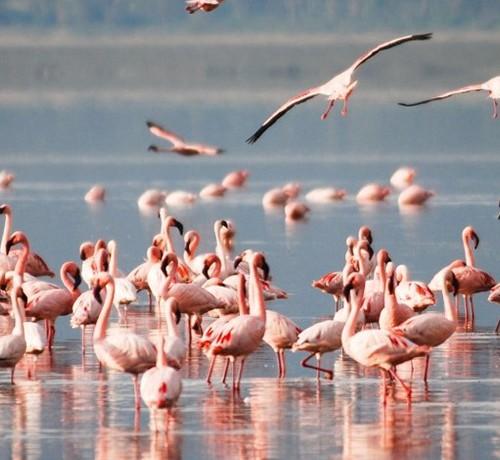 Kenya Lake Nakuru Masaimara