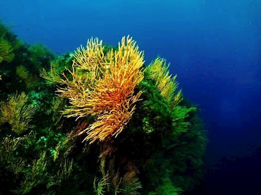 Diving Center Diving in Elba
