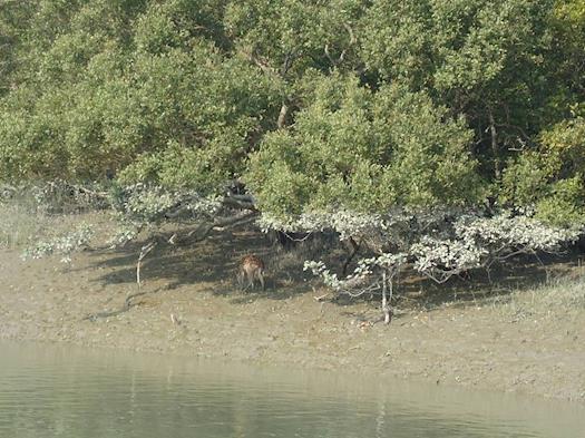 Sundarban Tour Operater