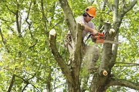 Tree Stump Removal NJ