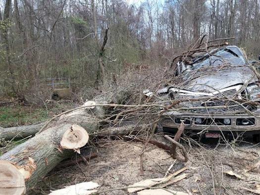 Tree Service Millersville, Maryland