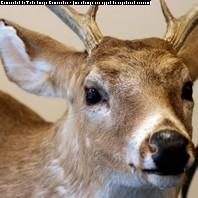 Garner's Deer Processing & Produce