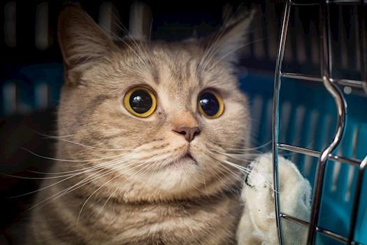 Cat Accessories Reviews