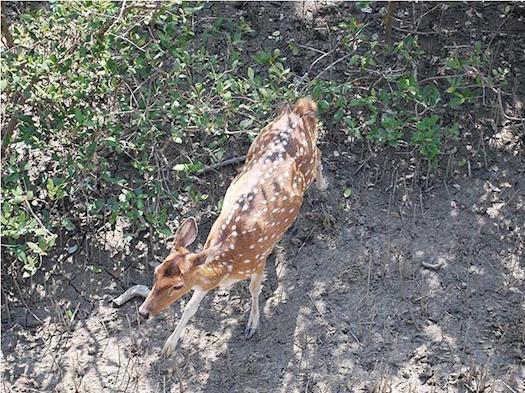 Sundarban Tiger Safari