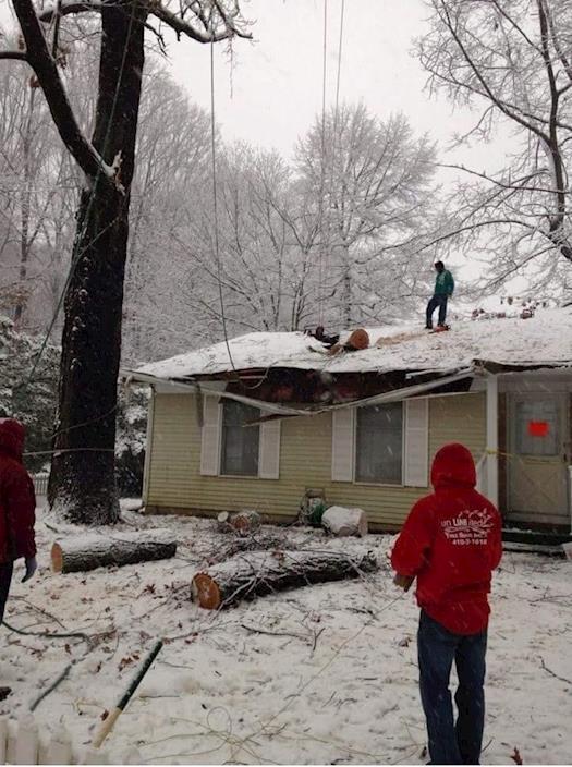 Storm Damage, Emergency Tree Service