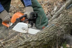 Tree Removal Service Somerville NJ