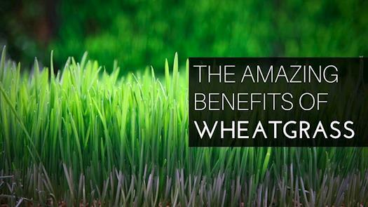Neutralise .Making India healthy | Wheatgrass