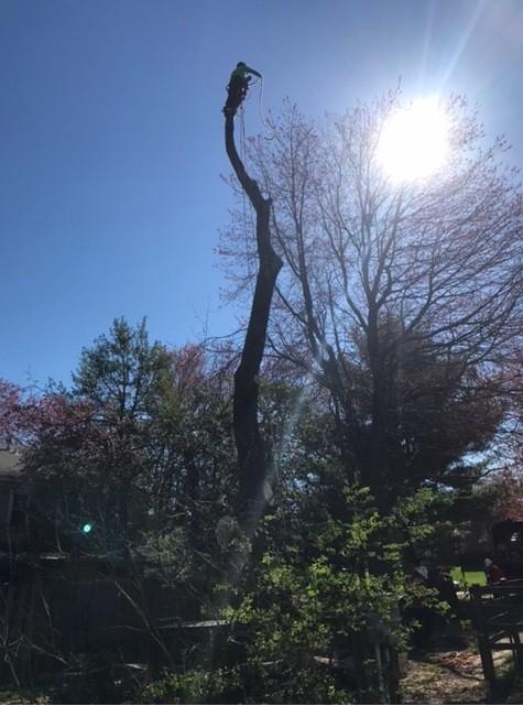 Tree Service Catonsville, Maryland