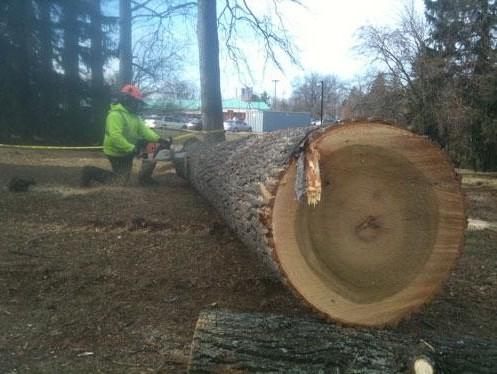 Tree Service Towson