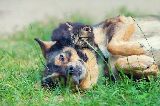 Lost and found pet rescue company