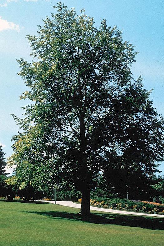 tree service bloomington mn