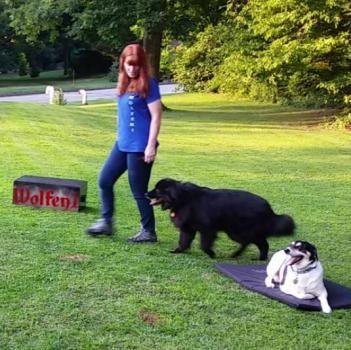 Wolfen1 Dog Training2