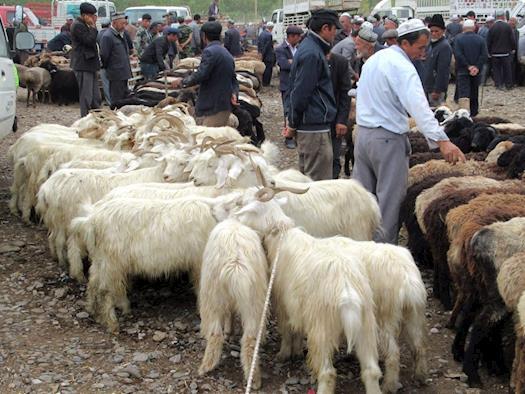 Tethered Sheep