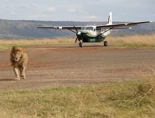 3 Nights Mara Flying Safari
