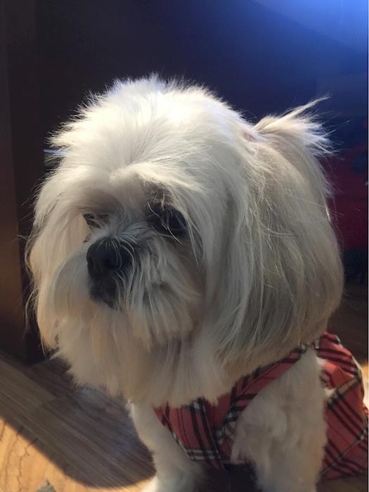 Coco the Wonder Dog