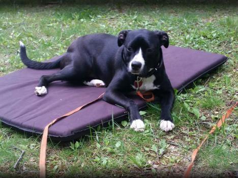 Wolfen1 Dog Training1