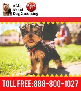 How to Become a Pet Groomer | How to Groom a Dog | Learntogroom.com