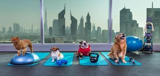 Best Centre in Dubai Providing Pets' Wellness Options