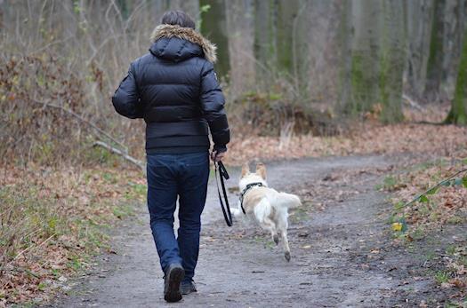 Dog Fitness & Wellness Programs