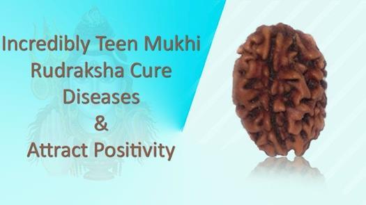 Natural 3 Mukhi Rudraksha Removes Your Stress, Anxiety and Depression