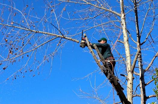 Tree Lopping in Bracken Ridge