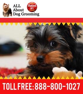 How to Become a Pet Groomer | Dog Groomers | Learntogroom.com