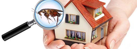 Restaurant Pest Control Adelaide