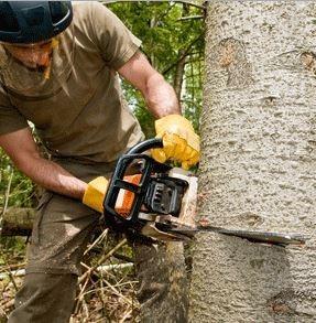 Tree Removal In Bracken Ridge