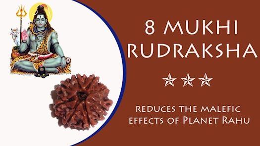 Eight Mukhi Rudraksha with Certificate for Energies
